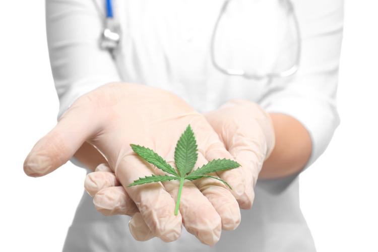 Cannabis for Palliative Care Nurse holding cannabis leaf