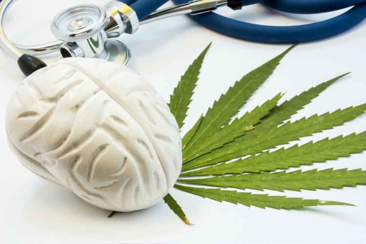 Cannabis for Alzheimers brain with cannabis leaf